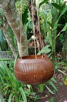 Flowerpot coconut polished/carved. Art. code: CCB006. Size Diameter aprox 13-15 cm. Price FOB 3,20 usd.